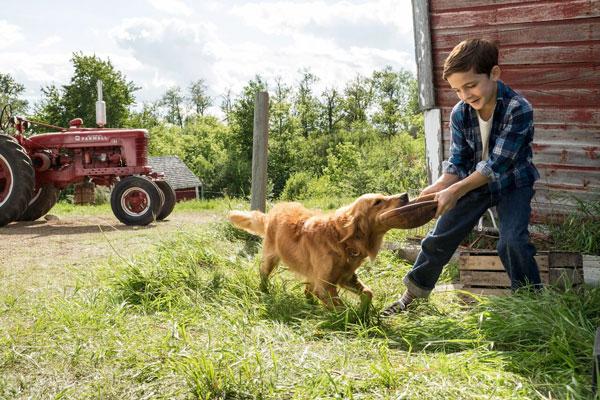Mes vies de chien de Lasse Hallström - Cine-Woman